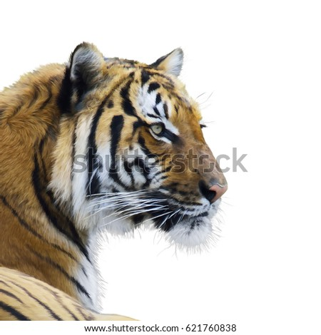Digital Painting Of tiger portrait