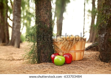 Digital Photography Background Of Fall Basket And Apples In Forrest