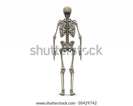 Digital Render Human Skeleton Back View Stock Illustration 30429742