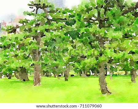 Japanese Black Pine Stock Images RoyaltyFree Images Vectors