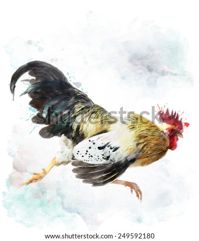 Digital Watercolor Painting Of Running Rooster, Isolated On White - stock photo