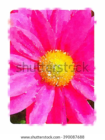 Digital watercolour of a pink daisy pollen flower in spring. - stock photo