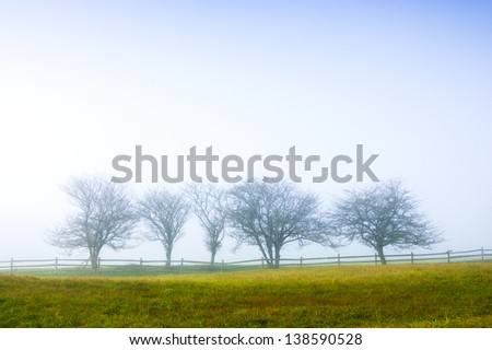 Digitall manipulated image of trees in fog, Stowe Vermont, USA - stock photo