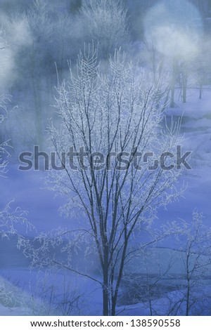 Digitally blue ice covered trees on a cold Vermont morning, Stowe, Vermont, USA - stock photo