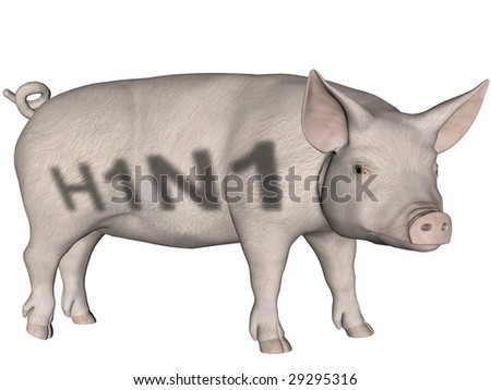 Digitally created word H1N1 on a rendered pig over white.