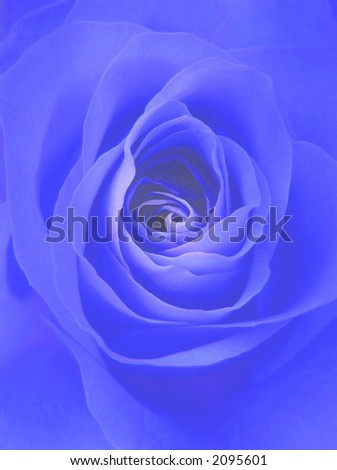 digitally enhanced photograph of a perfect rose