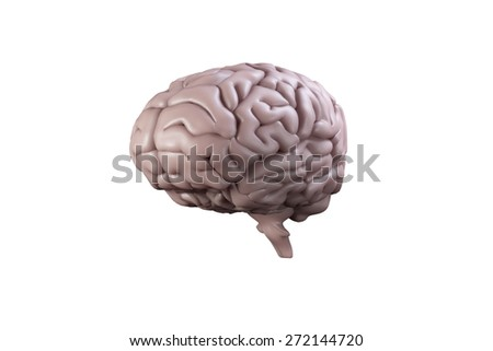 Digitally generated brain on white background