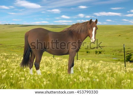 Digitally hand painted art from a photo of a pretty horse in a wildflower meadow.  - stock photo