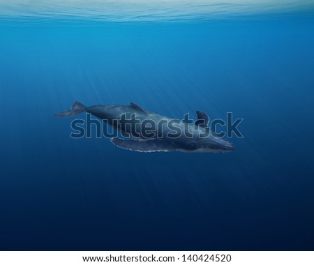Digitally illustrated whale - stock photo