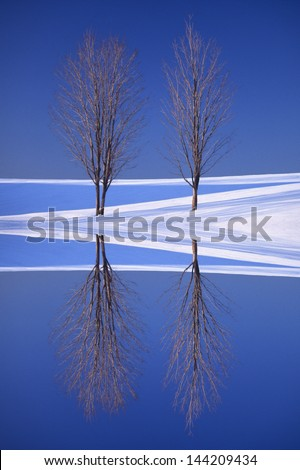 Digitally manipulated image and reflection of two bare trees in winter.