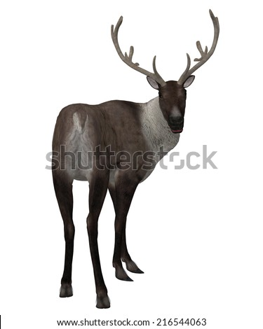 Digitally rendered illustration of a reindeer on white background.