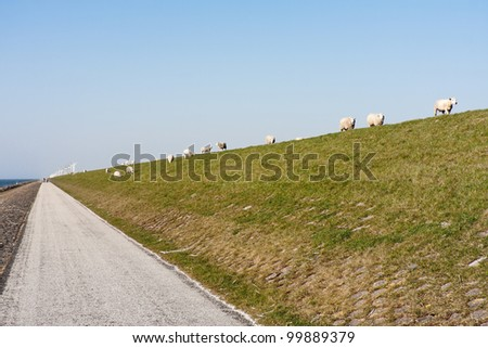 Dike with sheep and windmills in the Netherlands