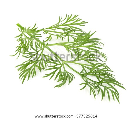 Dill close-up isolated on a white background. - stock photo