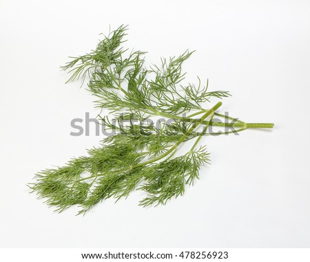 Dill green herb fresh fragrant aromatic ingredient on white background