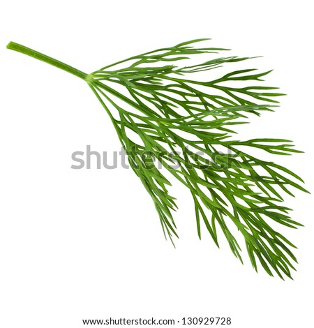 dill herb leaf close up macro  isolated on white background - stock photo