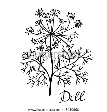 Dill plant sketch.Hand drawn illustration. Elements for design.
