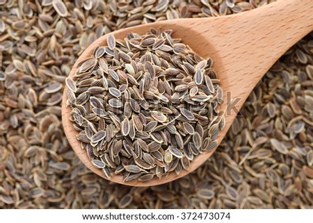 dill seed - stock photo