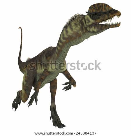 Dilophosaurus Dinosaur over White - Dilophosaurus was a theropod carnivorous dinosaur that lived in the Jurassic Period of Arizona.