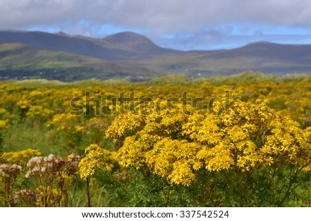 Dingle peninsula landscape - stock photo