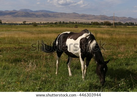 Dining out in Montana (or grazing horse) - stock photo