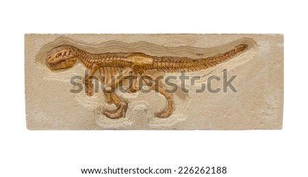 dinosaur fossil model isolate on white background. - stock photo