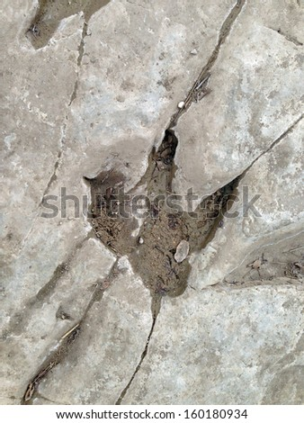 Dinosaur tracks in Dinosaur Valley State Park, Texas - stock photo