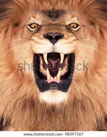 Lion Roar Stock Images RoyaltyFree Images Vectors Shutterstock