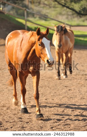Dirt corral with many horses inside - stock photo