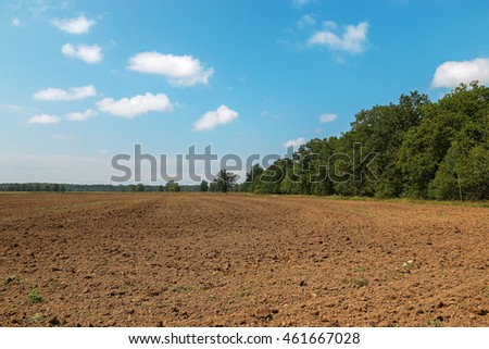 Dirt harvest field and green forest on its edge at hot summer day