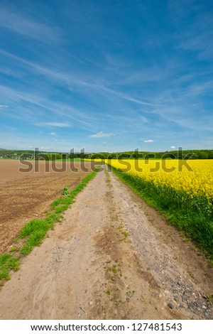 Dirt Road between Fields of Lucerne in Germany