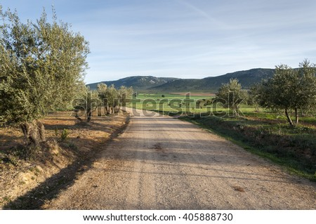 Dirt road between olive groves in an agricultural landscape in La Mancha, Ciudad Real Province, Spain. In the background can be seen the Toledo Mountains - stock photo