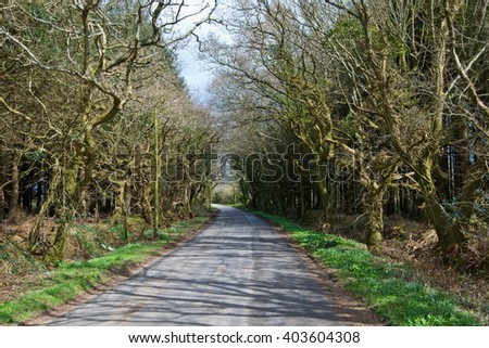 Dirt Road Creepy Marsh Oak Trees Tunnel with spanish moss on Cornwall,uk - stock photo