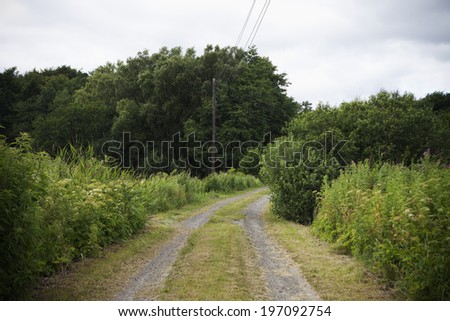 Dirt road going through forest - stock photo