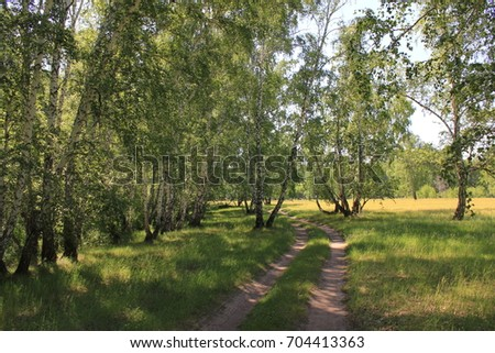 Dirt road in a birch forest