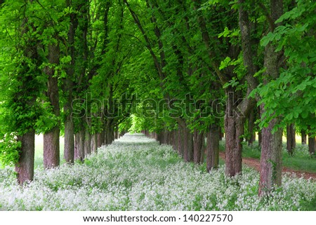 Dirt road in a park with line  of trees