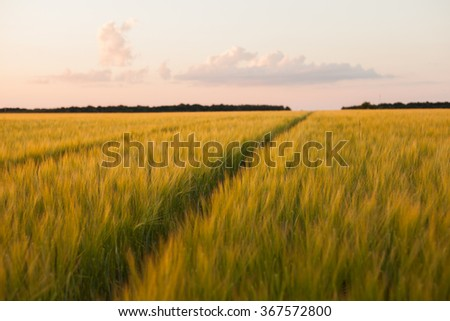 Dirt Road in a wheat field on a summer sunset - stock photo