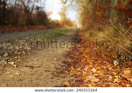 Dirt road in Autumn. Small depth of field. - stock photo
