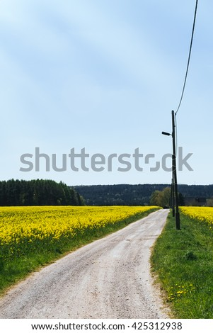 Dirt road in summer with sunlight