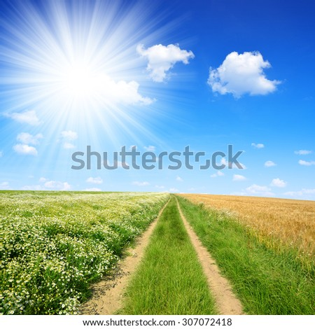 Dirt road in sunny day. Summer landscape. - stock photo
