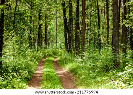 Dirt road in the middle of an old forest - stock photo
