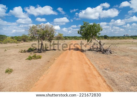 Dirt road in Yala national park, second largest national park in Sri Lanka. - stock photo