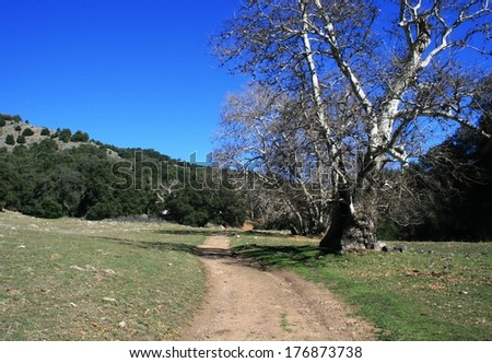 Dirt road leading past a bare sycamore tree in a meadow, California - stock photo