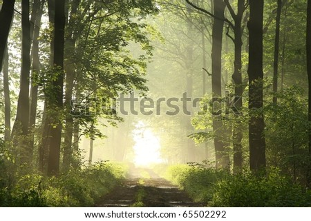 Dirt road leading through the deciduous forest on a misty spring morning.