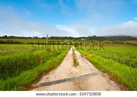 Dirt Road Leading to the Farmhouse in Tuscany, Italy - stock photo