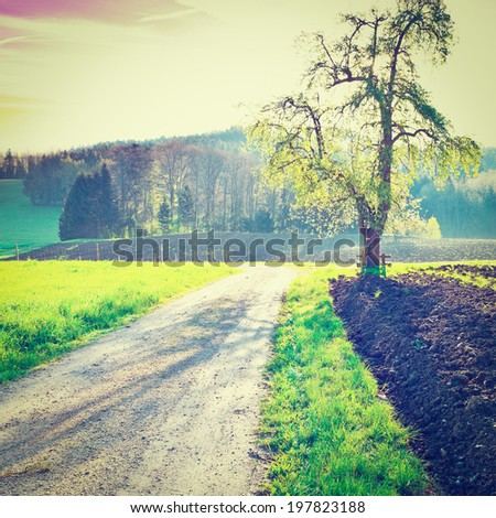 Dirt Road near the Forest in Swiss Alps, Sunrise, Retro Effect - stock photo