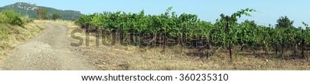 Dirt road near vineyard, France                                - stock photo