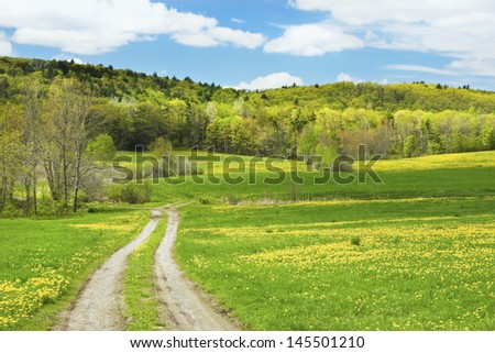 Dirt road through colorful green and yellow blooming Dandelion flowers in spring farm field,  maine. - stock photo