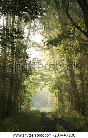 Dirt road through deciduous forest on a foggy morning. - stock photo