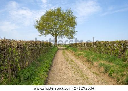Dirt road through sunny farmland in spring - stock photo