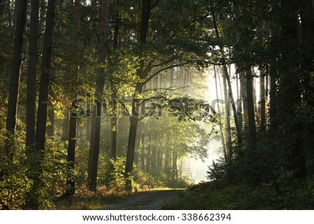 Dirt road through the forest on a foggy morning. - stock photo